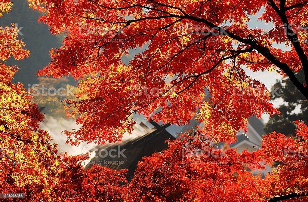 Autumn of Asuke stock photo