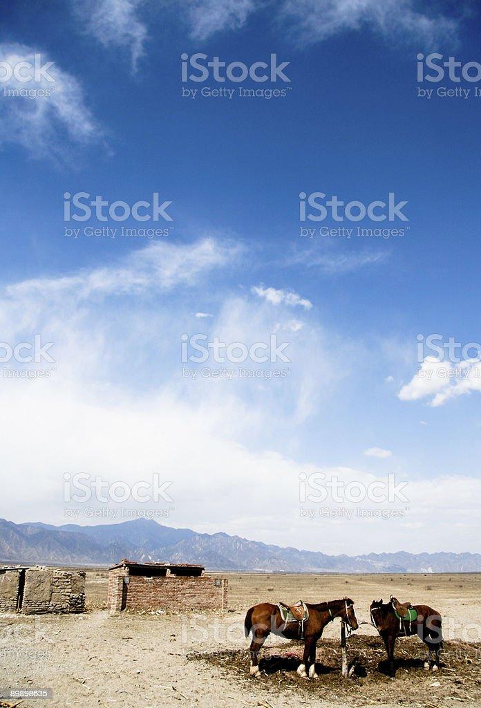 Otoño campo de pekín foto de stock libre de derechos