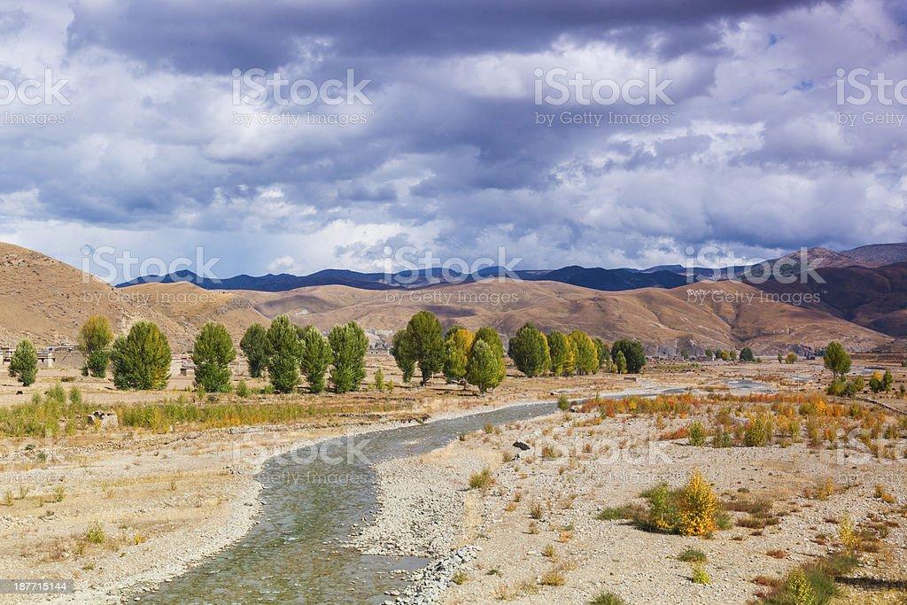 autumn of poplar royalty-free stock photo