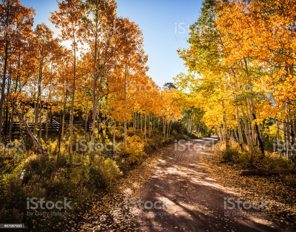 Autumn On a Dirt Road in Colorado stock photo