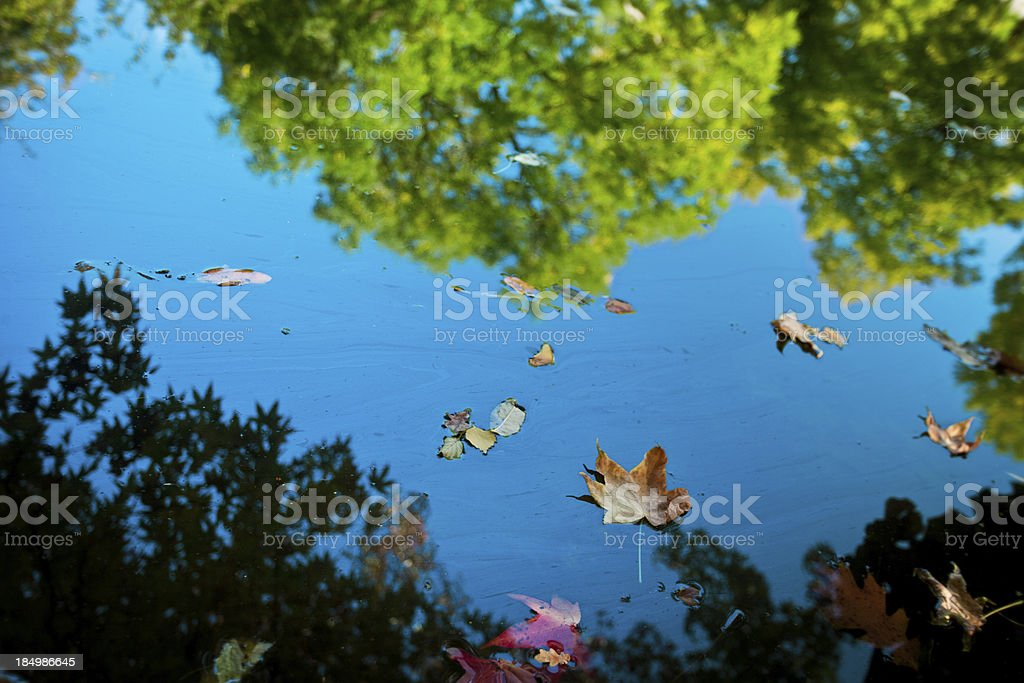 Autumn on beautiful pond stock photo