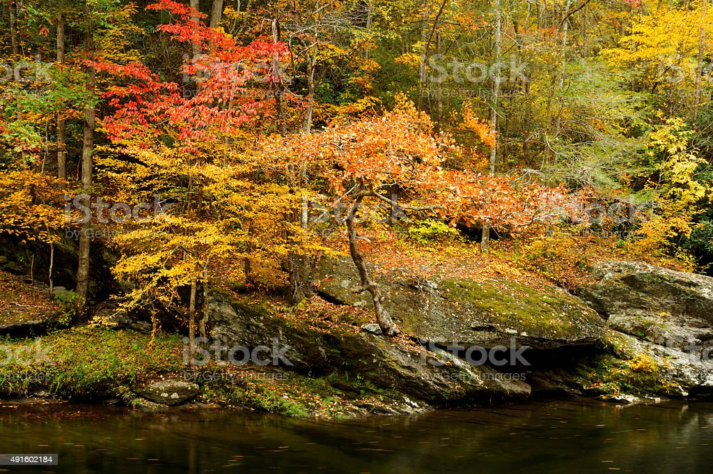 Autumn on Little Pigeon River stock photo