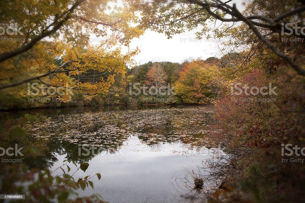 Autumn on the Pond stock photo