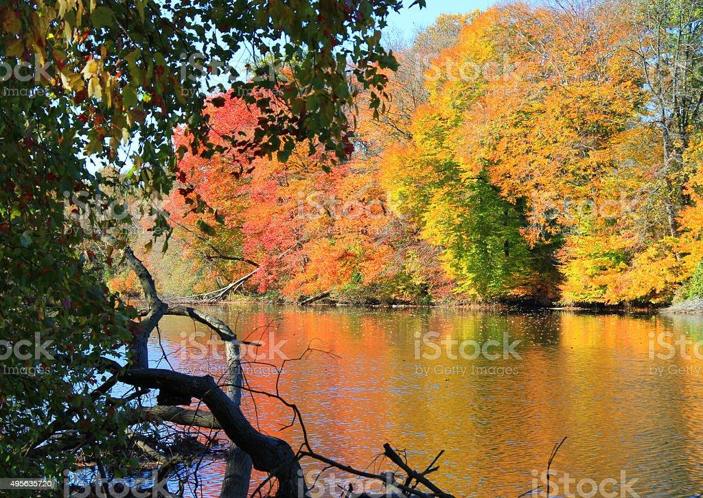 Autumn on the river stock photo