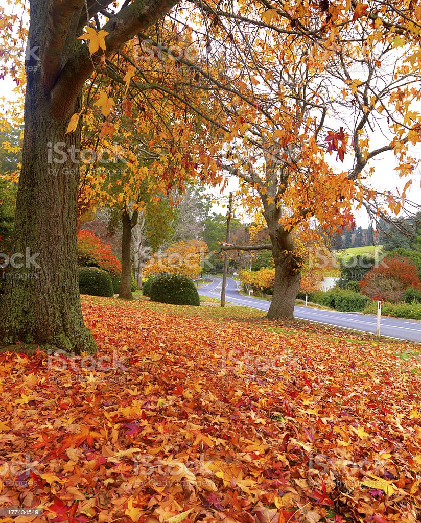 Autumn on the town of Olinda road royalty-free stock photo