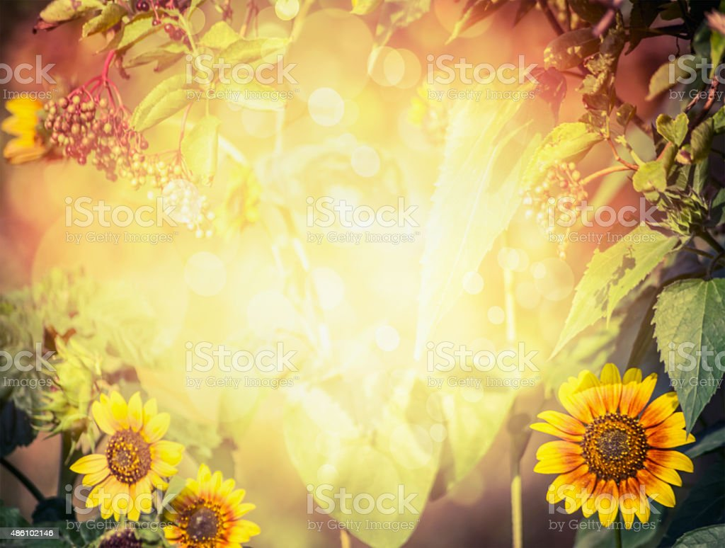 Autumn or summer blurred nature background with sunlight and bokeh. stock photo