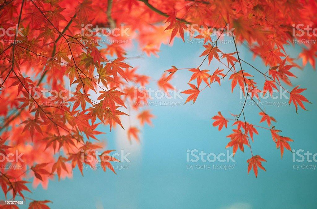 Autumn Orange Leaves against Green Lake royalty-free stock photo
