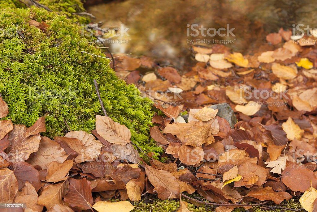 Las hojas de otoño naranja - foto de stock
