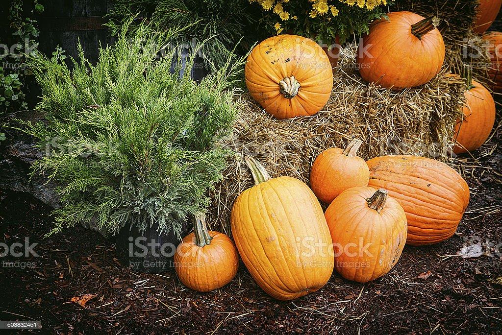 Autumn Outdoor Decor - Nostalgic 1 royalty-free stock photo