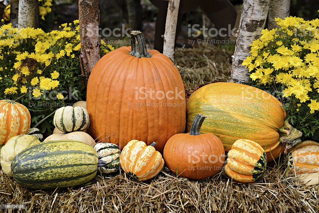 Autumn Outdoor Decor - vibrant 3 royalty-free stock photo