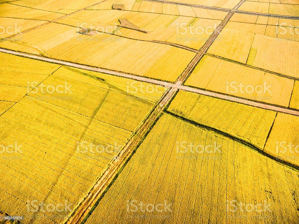 autumn paddy fields stock photo