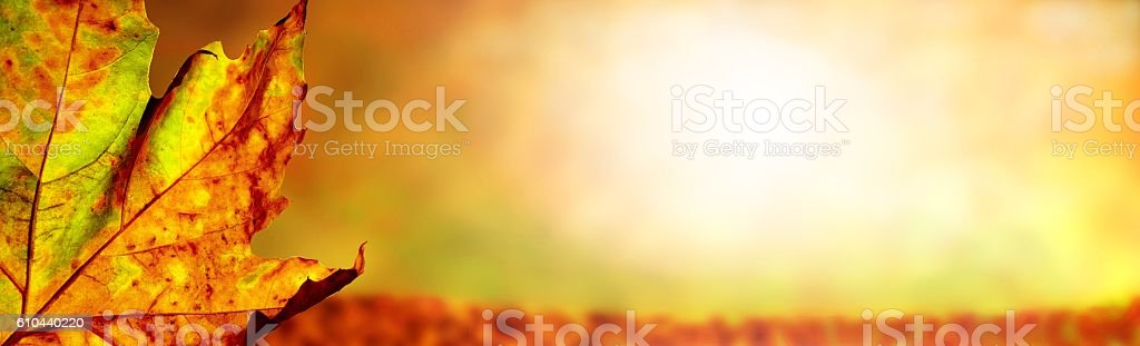 autumn panorama background stock photo