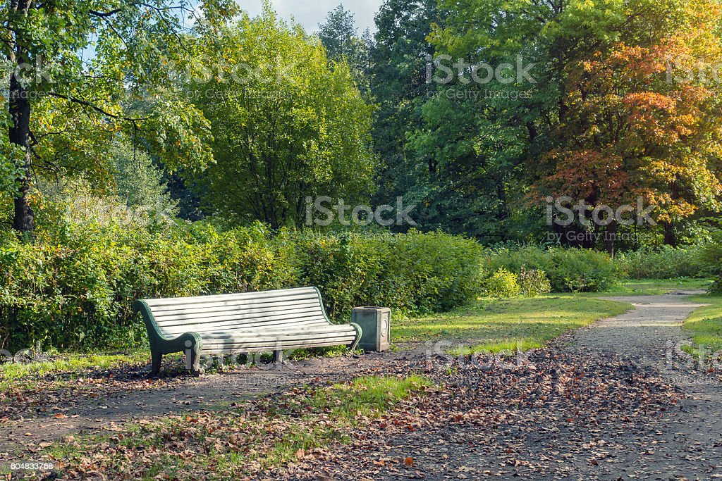 Autumn park. A white bench in alley foto de stock royalty-free