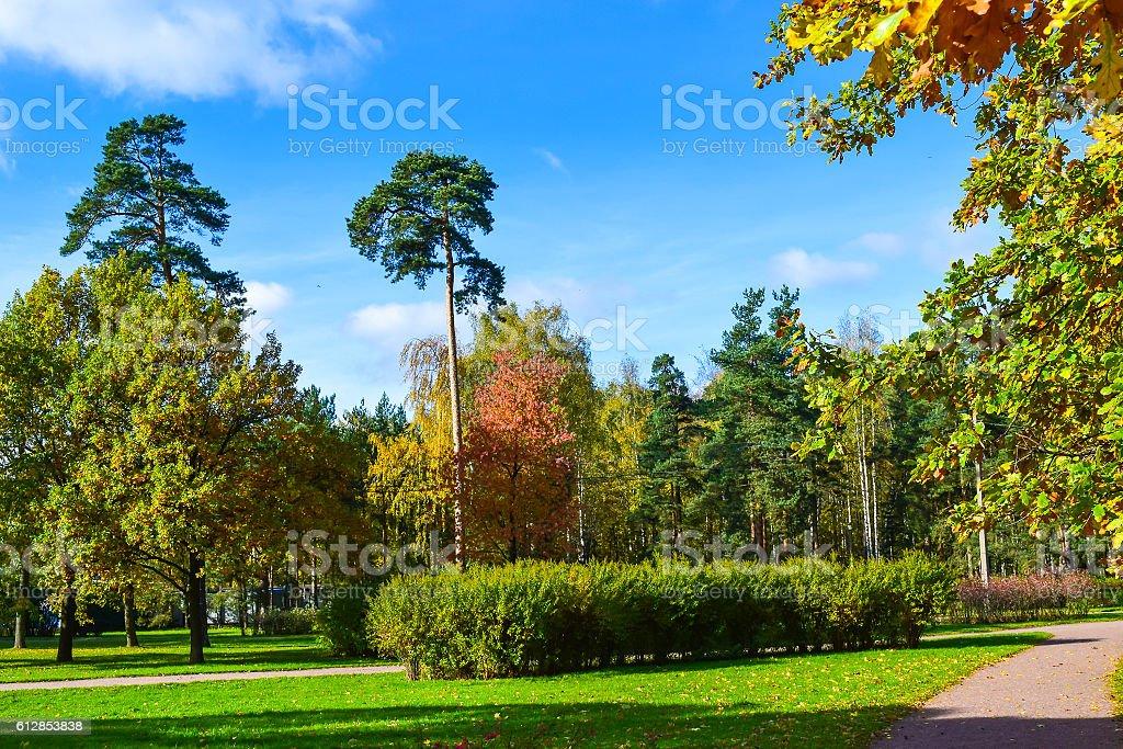 Autumn park autumn sky stock photo