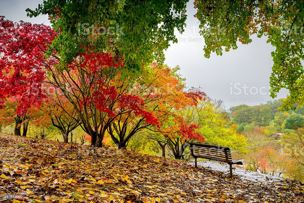Autumn park during the rain stock photo