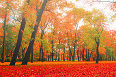 Autumn park in foggy weather - colorful autumn nature landscape