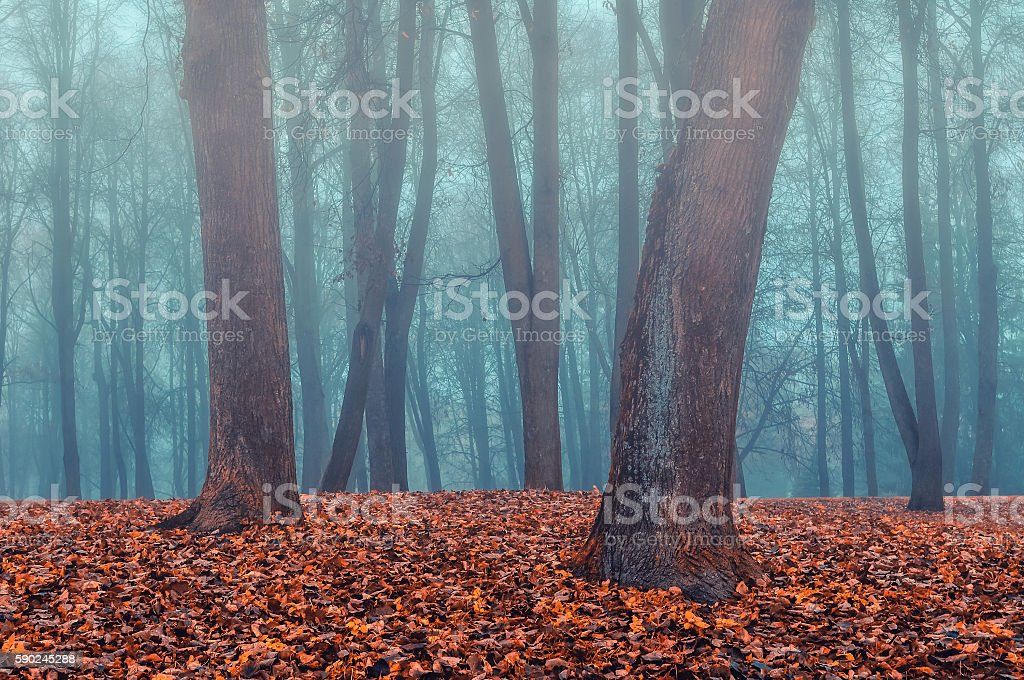 Autumn park in the fog - autumn misty landscape stock photo