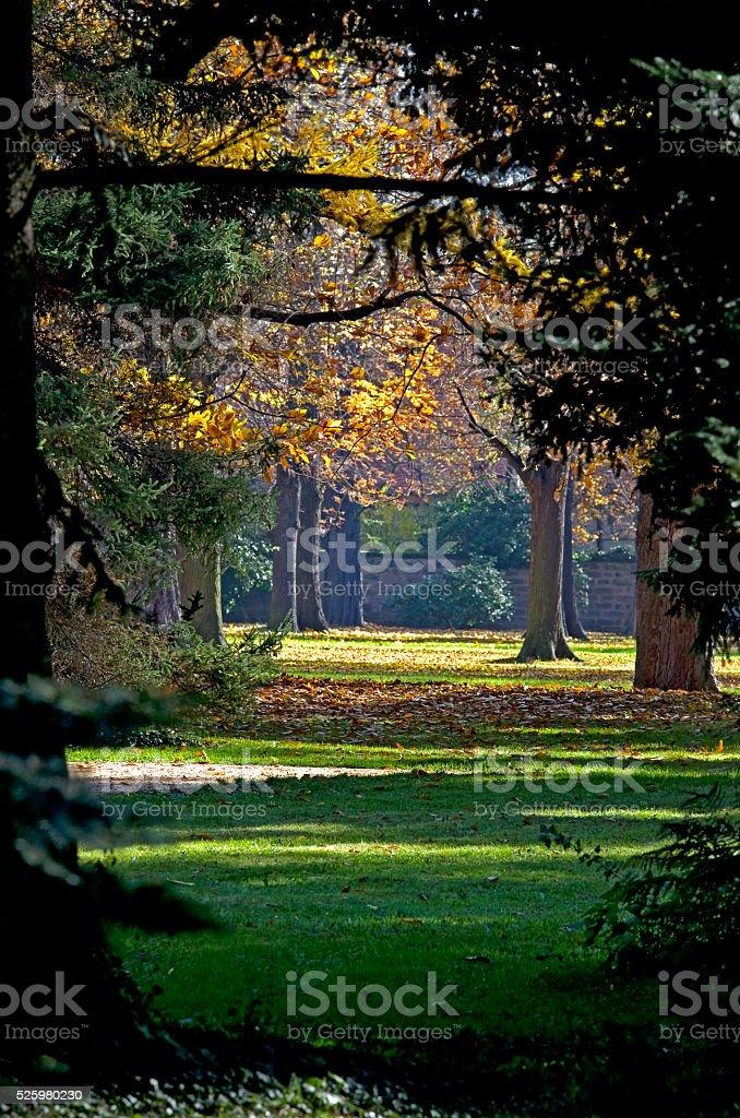 Autumn park in the sunlight royalty-free stock photo