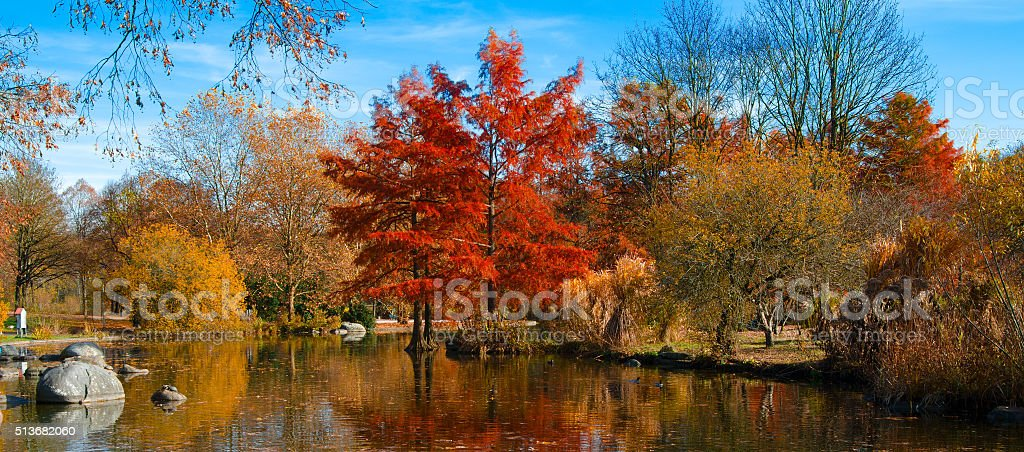 Autumn Park landscape stock photo