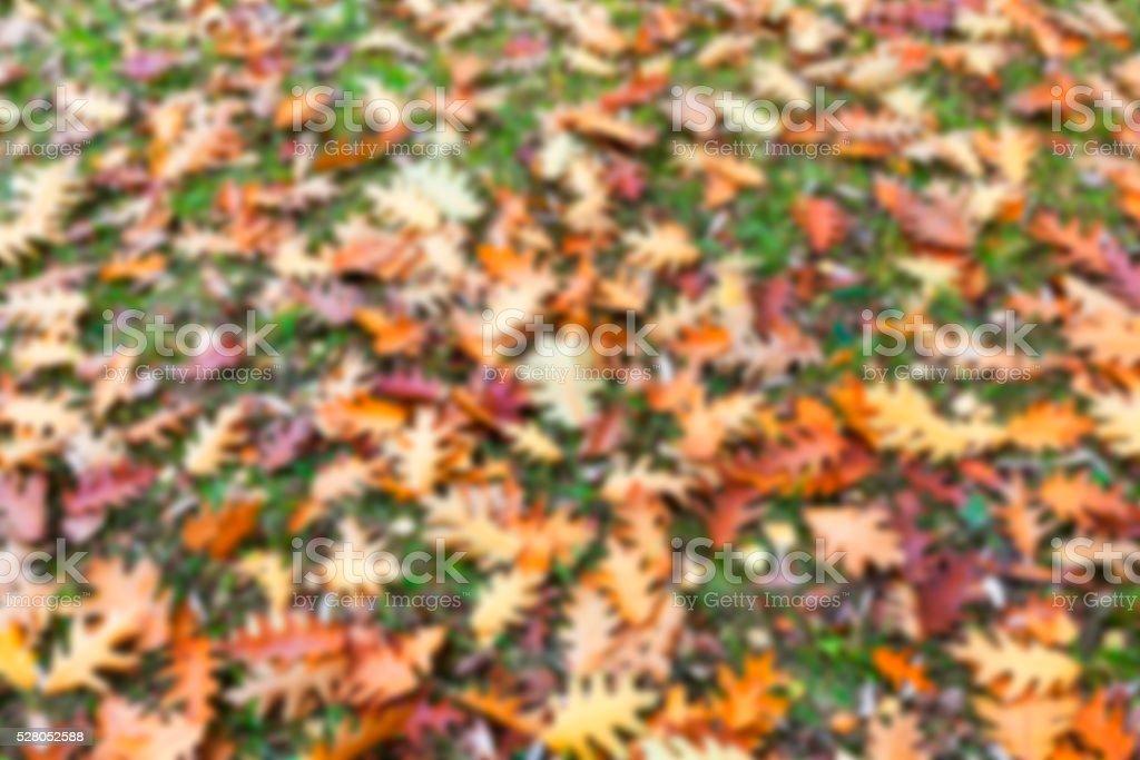 Autumn Park, overcast stock photo