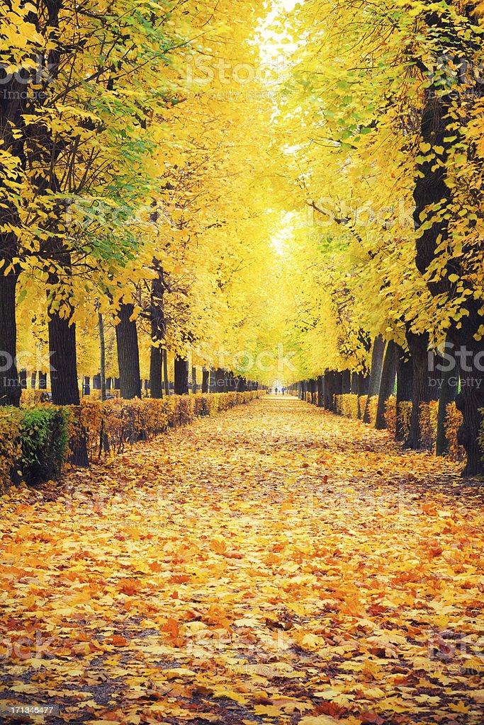 Autumn Park royalty-free stock photo