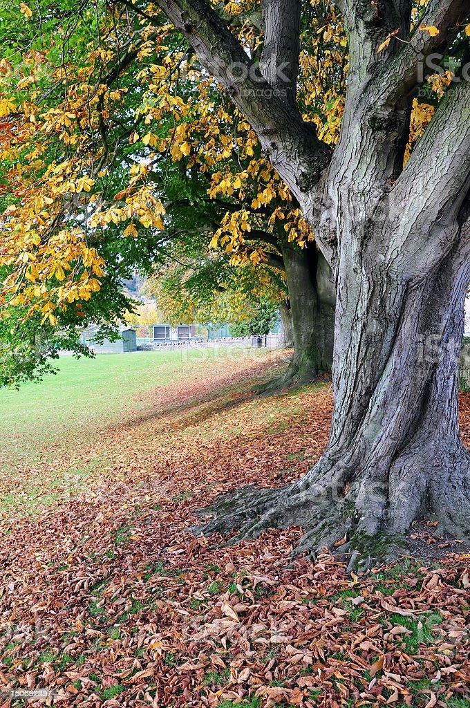 Autumn Park View royalty-free stock photo
