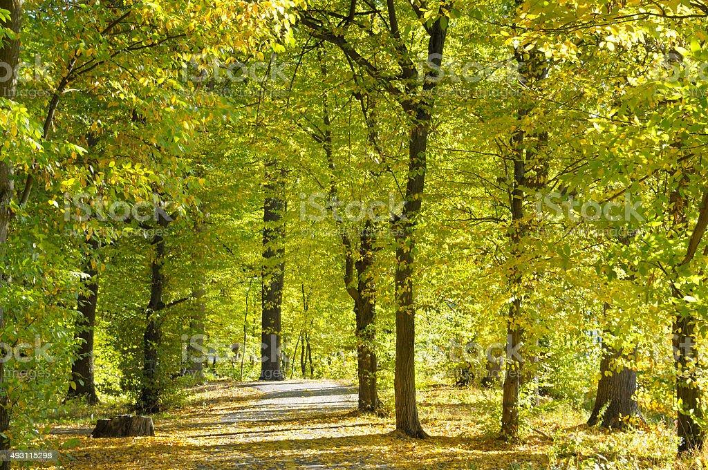 autumn park with soft sunlight stock photo