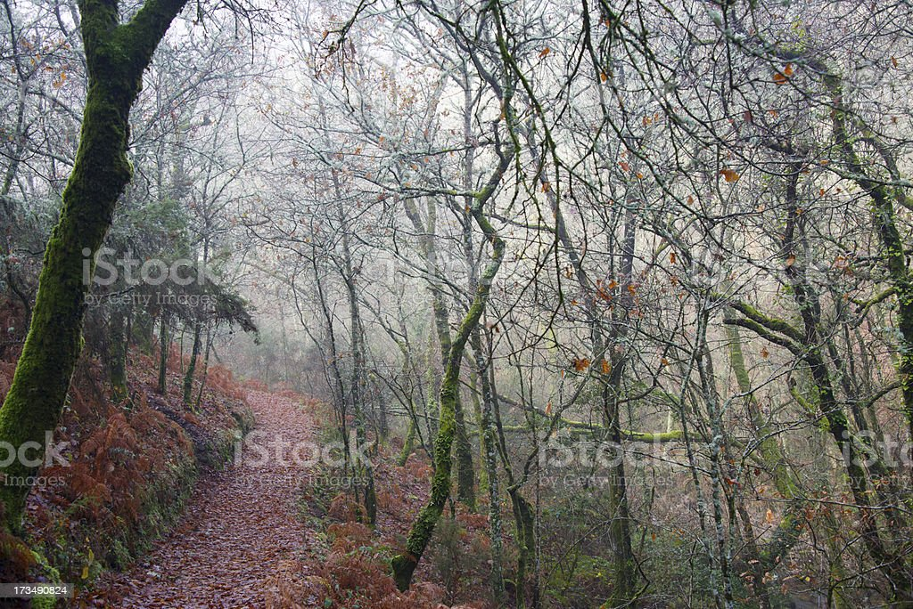 Autumn path royalty-free stock photo