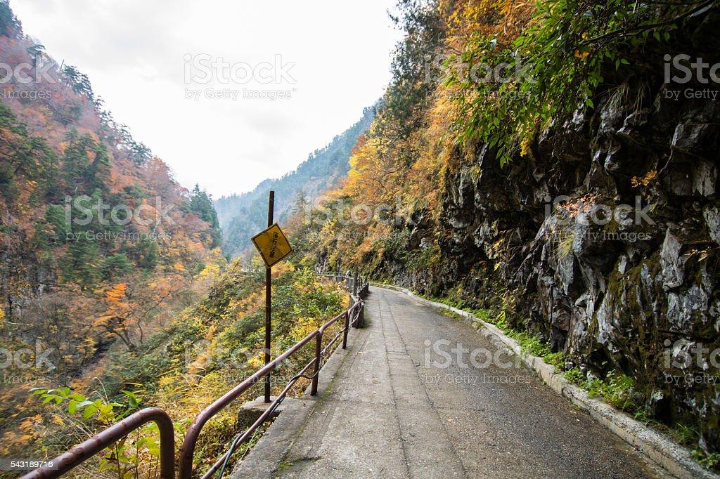 Autumn Pathway stock photo