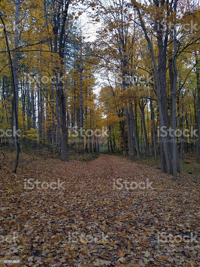 Autumn Pathway stock photo