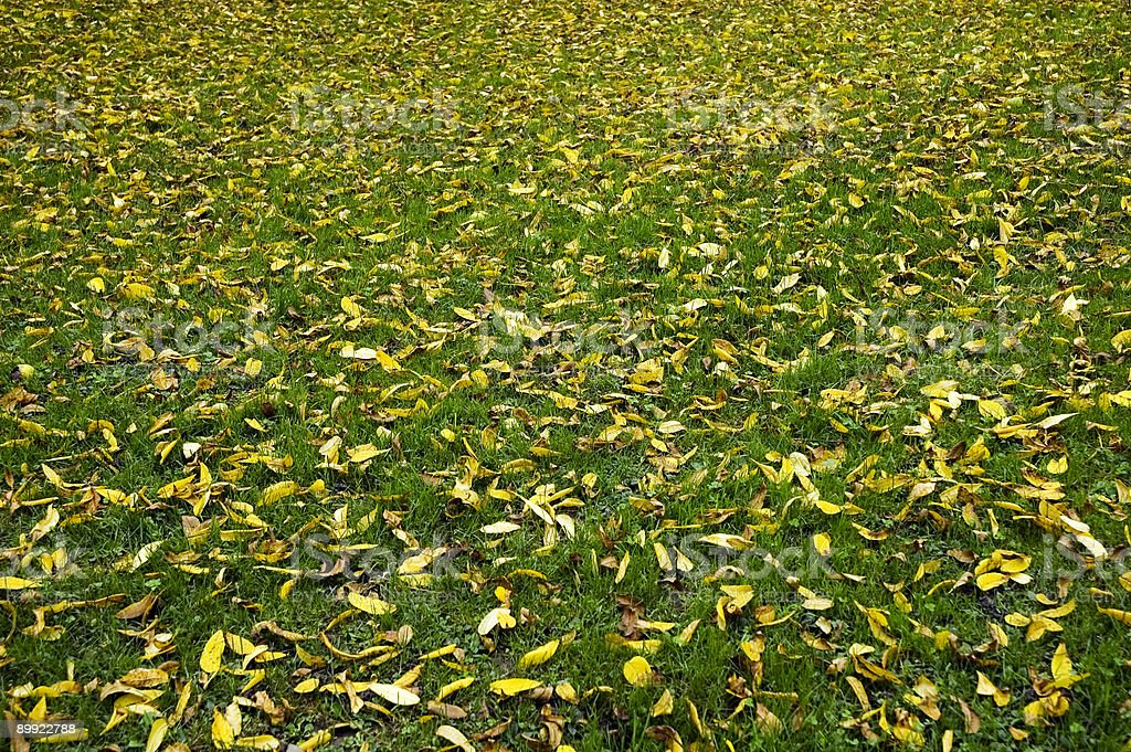 Autumn Pattern with Green Grass and Yellow Leaves royalty-free stock photo