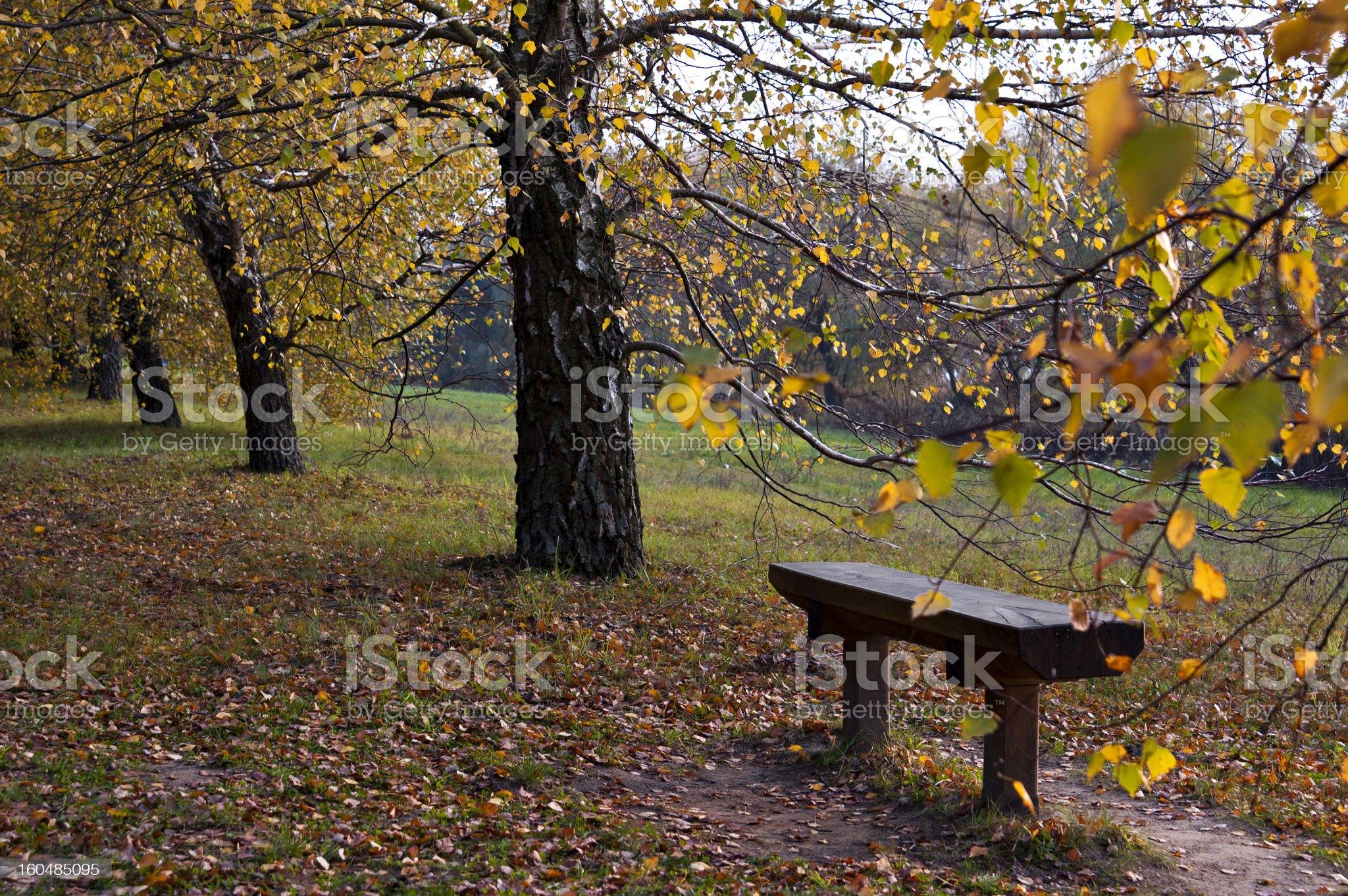 Autumn pew royalty-free stock photo