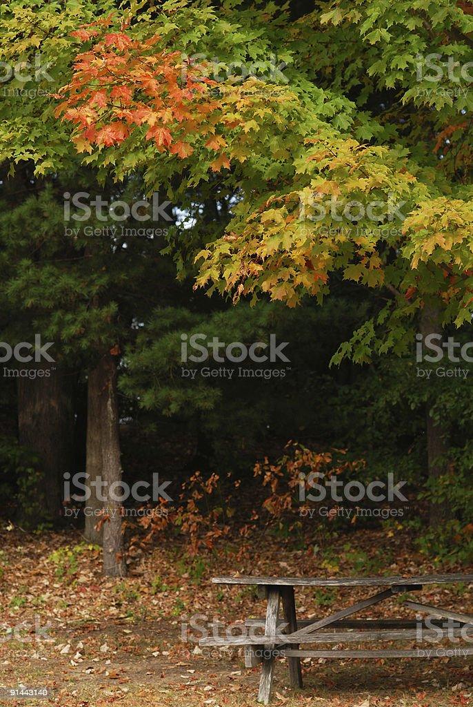 Outono detalhe da mesa de piquenique foto royalty-free
