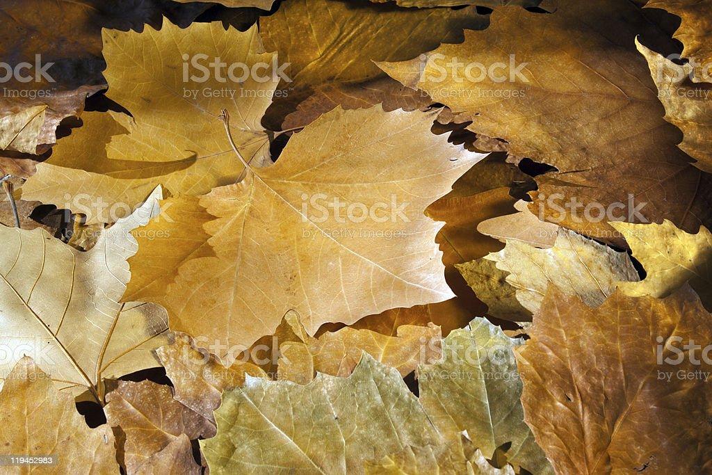 Outono foto de stock royalty-free