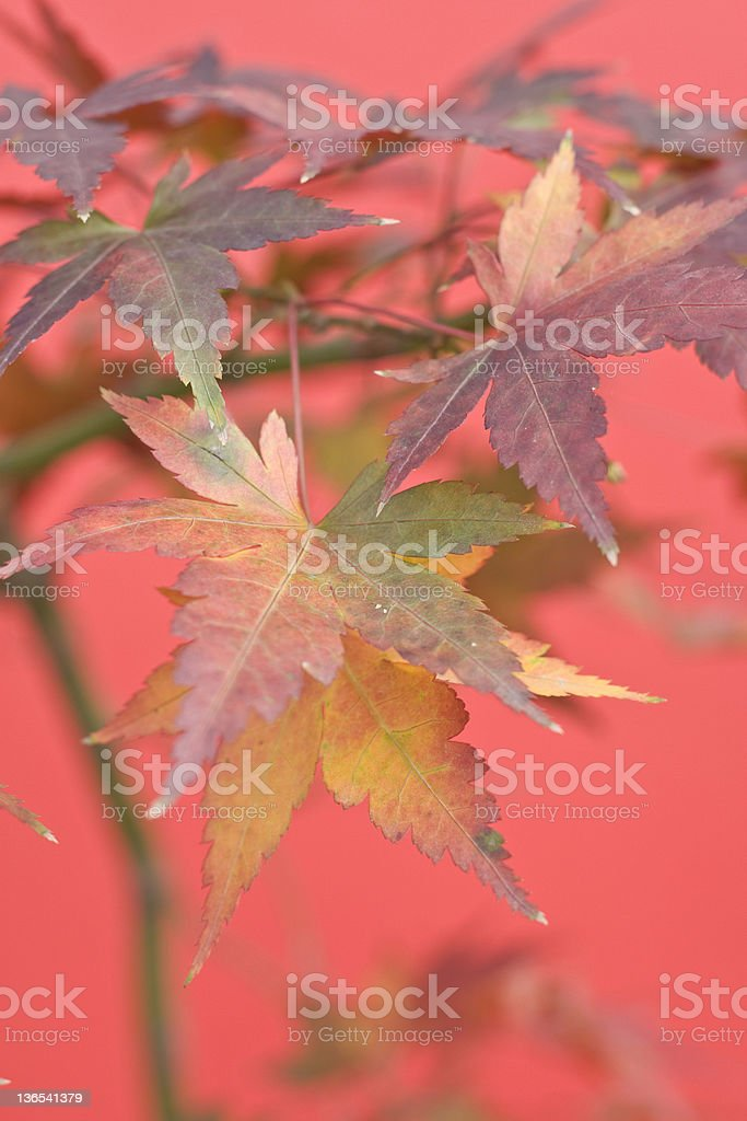 Autumn royalty-free stock photo
