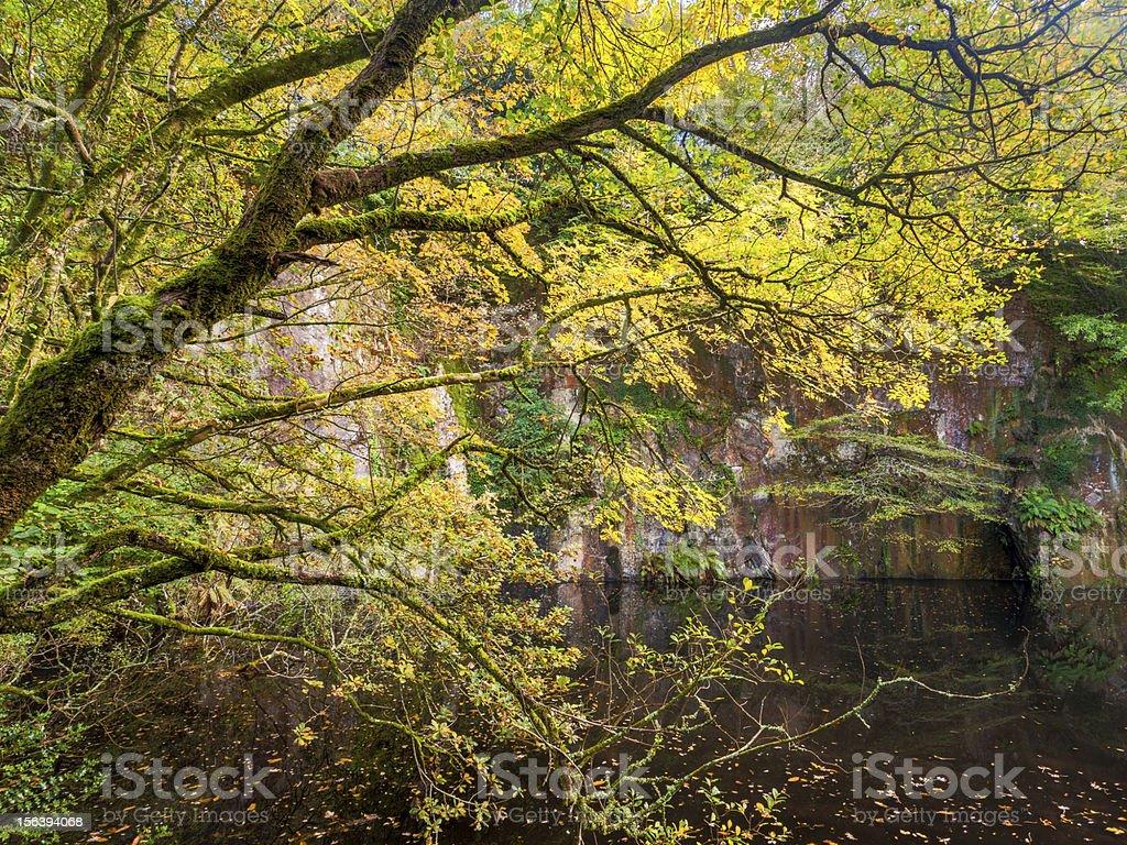 L'automne photo libre de droits