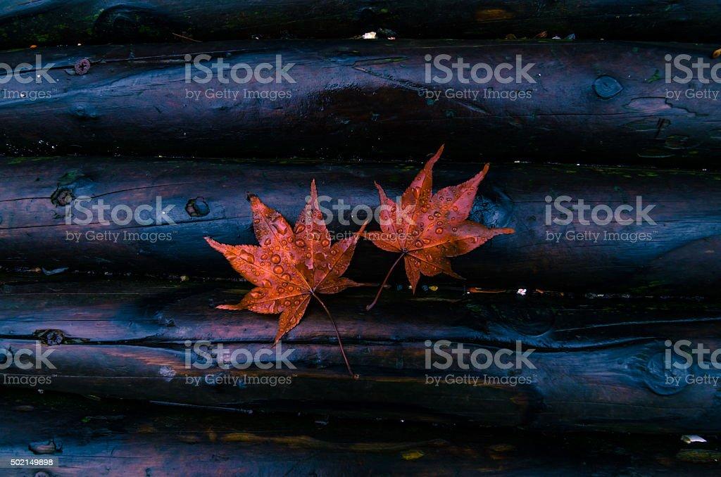 Осень Стоковые фото Стоковая фотография