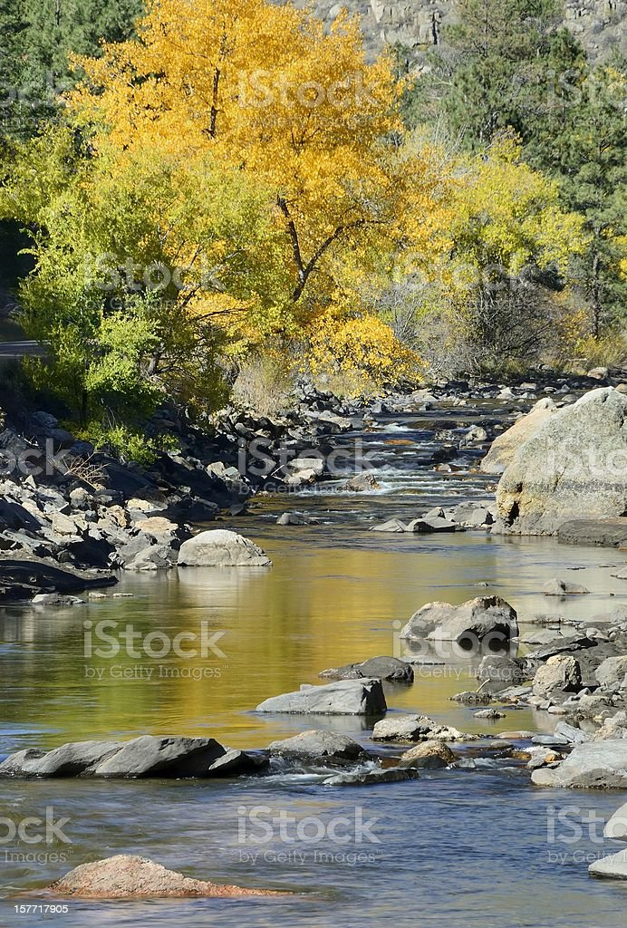 Autumn picture of the Poudre river with trees and rocks stock photo
