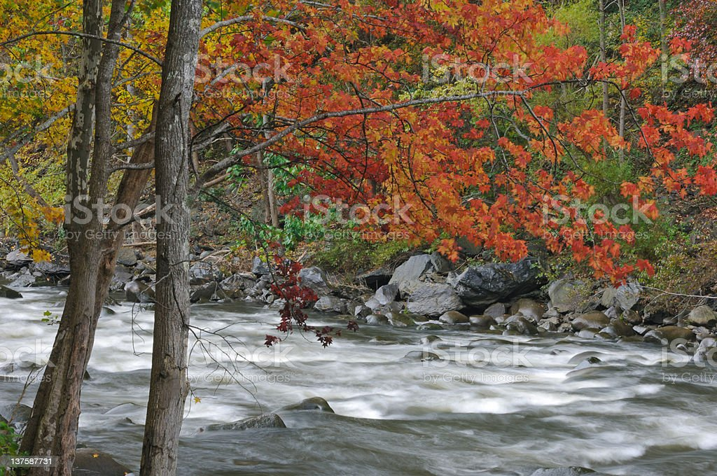 Autumn, Pigeon River royalty-free stock photo