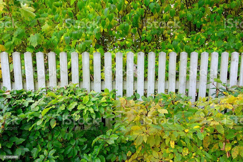 Autumn plants with white fence royalty-free stock photo