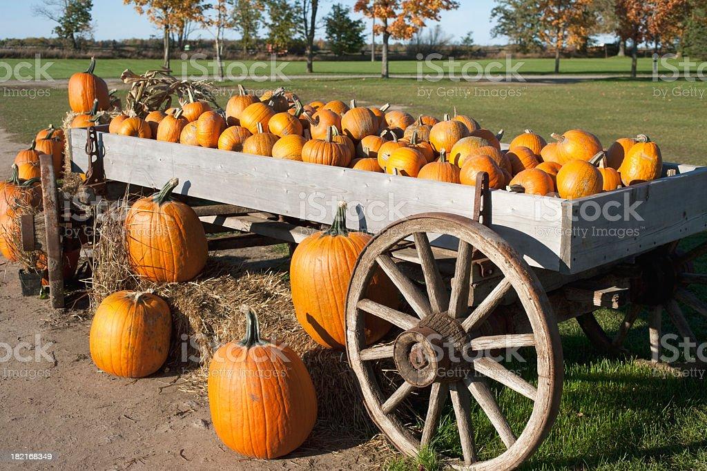 Autumn Pumpkin stock photo
