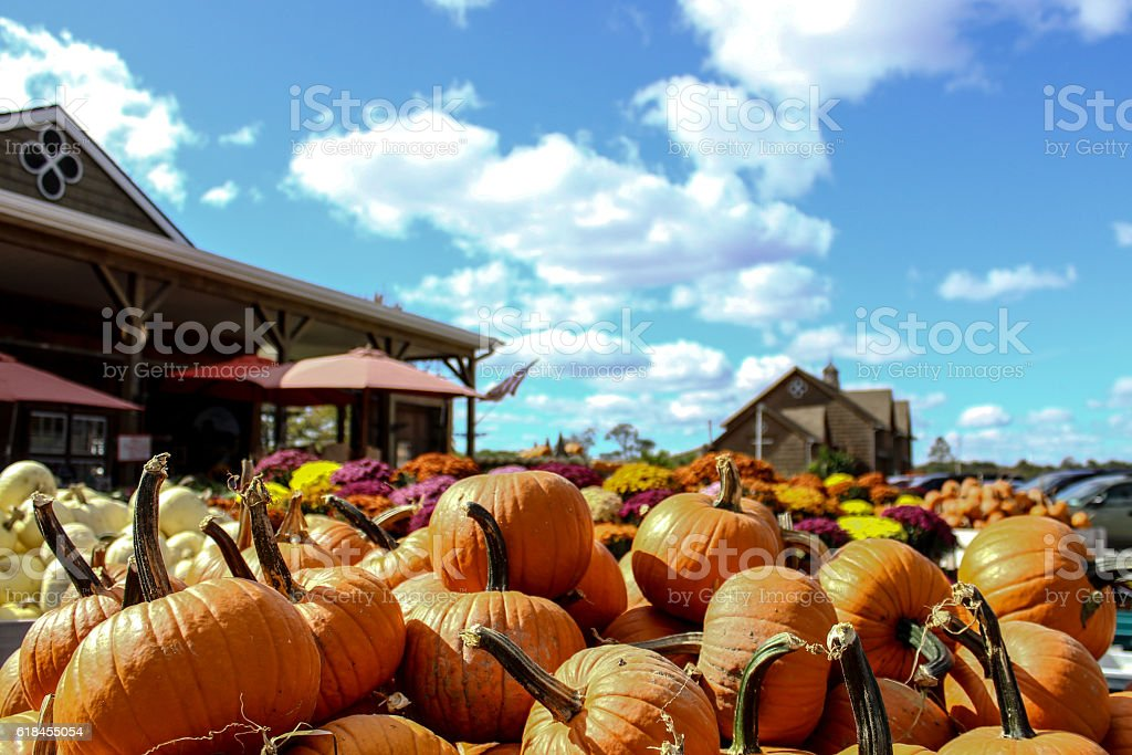 Autumn Pumpkin Sale stock photo