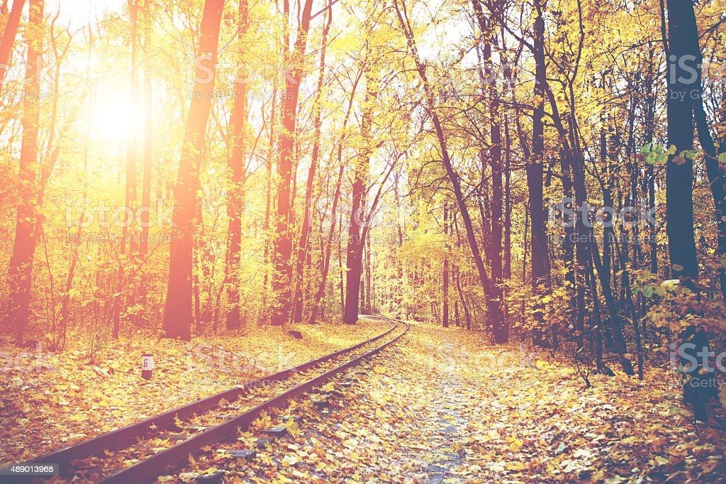 Railroad through the autumn forest