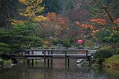 Autumn Rain on the Japanese Garden