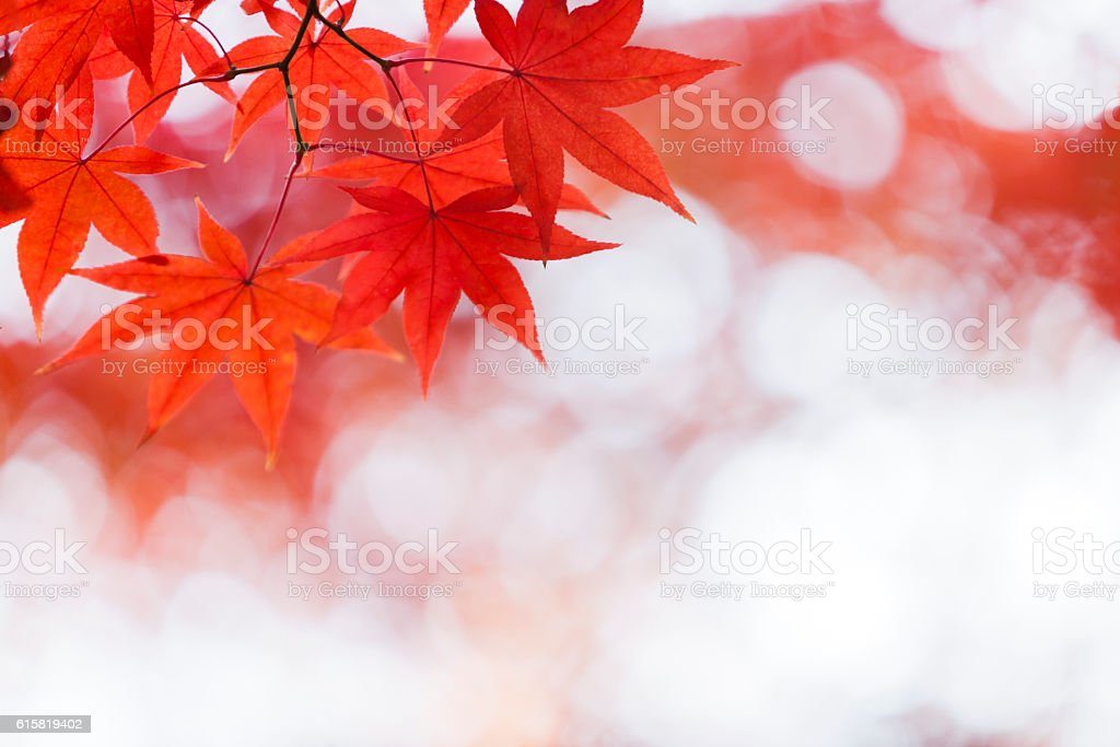 Autumn Red Leaves Close Up stock photo