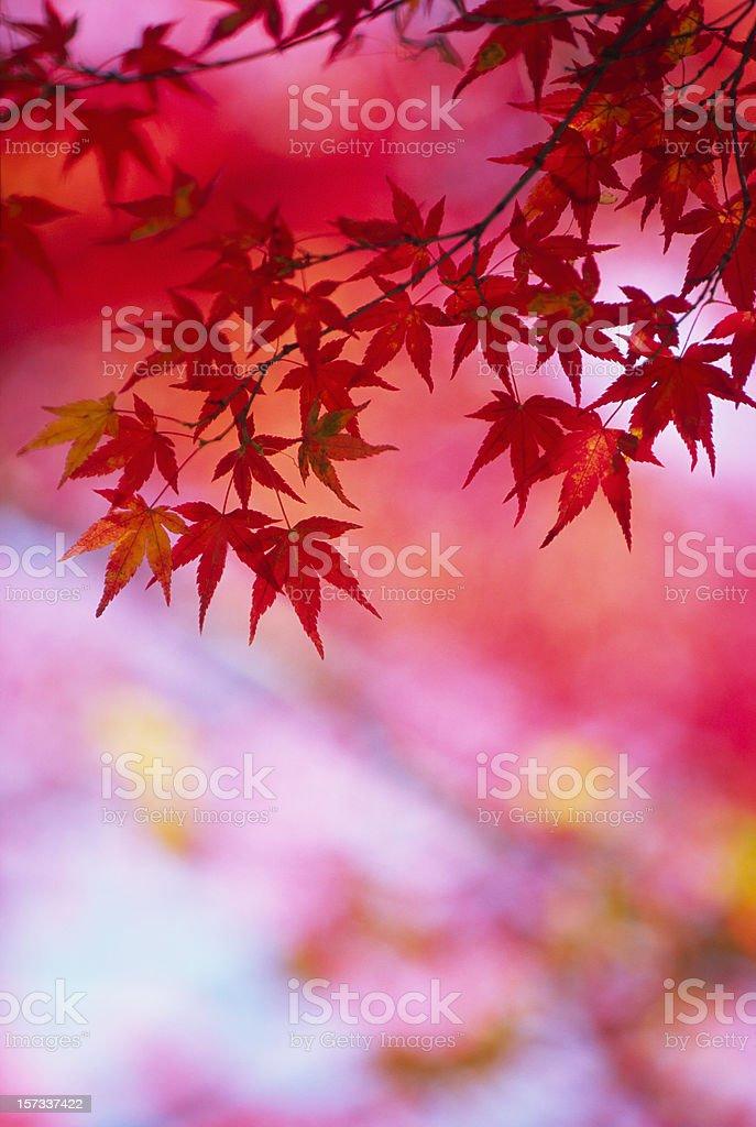 Autumn red royalty-free stock photo