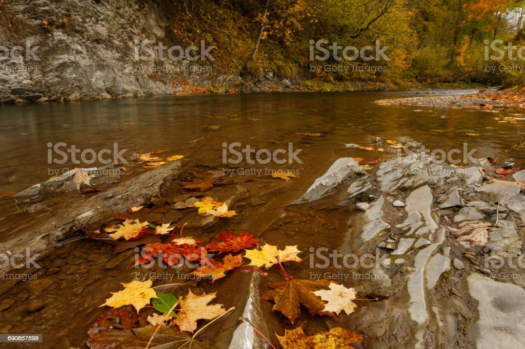 Autumn river natural landscape stock photo