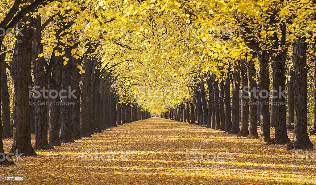 Autumn road and alley stock photo