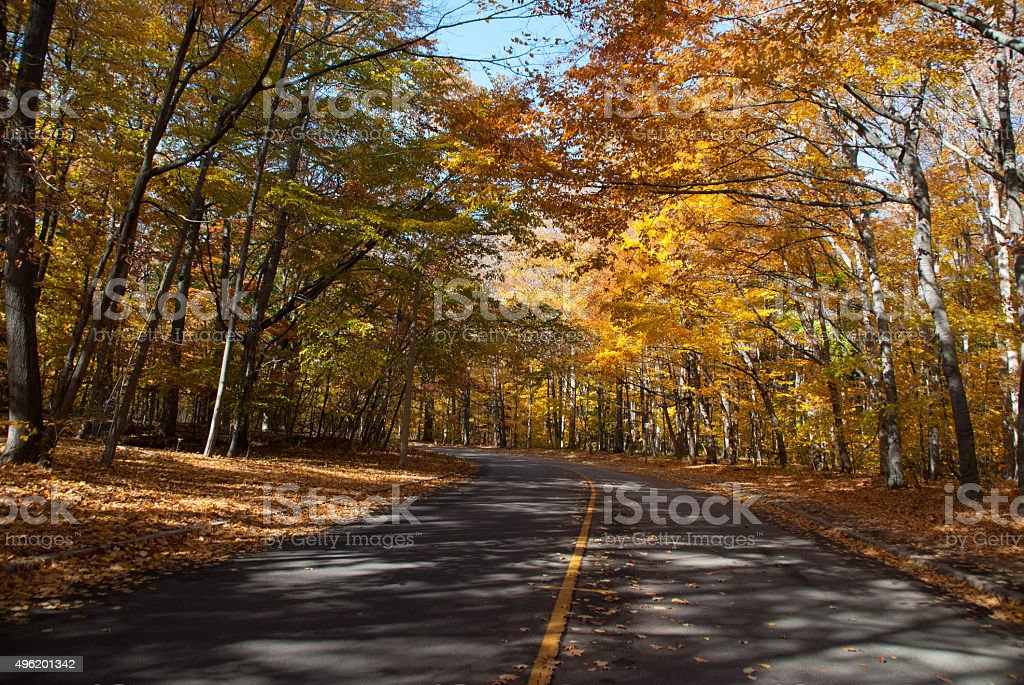 Autumn road in a forest stock photo