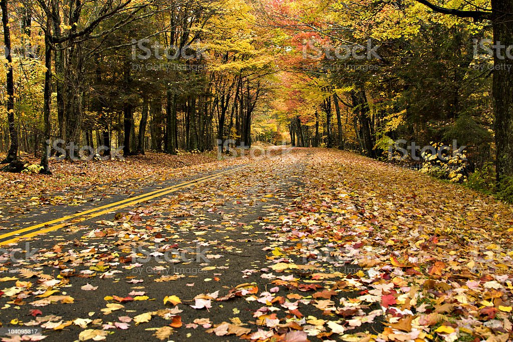 Autumn road in Grayson Highlands State Park, Virginia royalty-free stock photo